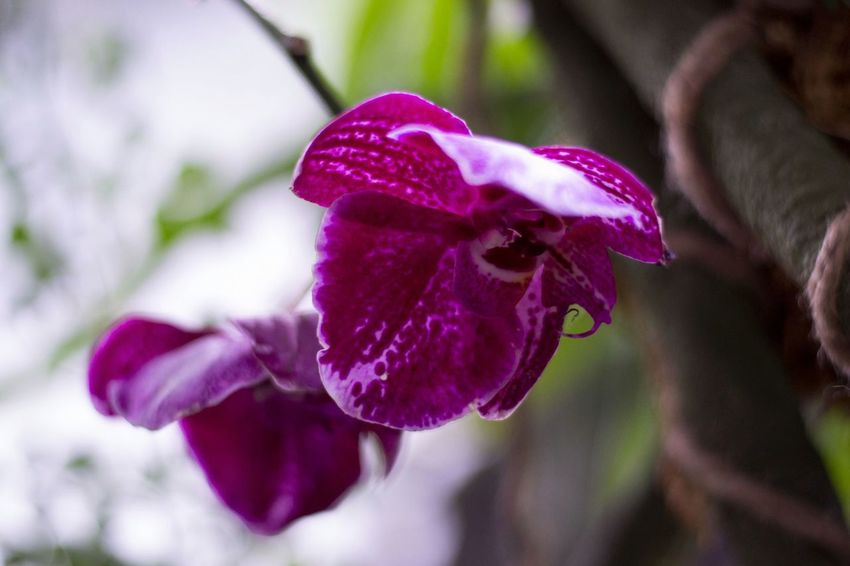 Flower Fragility Nature Beauty In Nature Petal Pink Color Close-up Freshness Purple No People Flower Head Outdoors Plant Growth Day