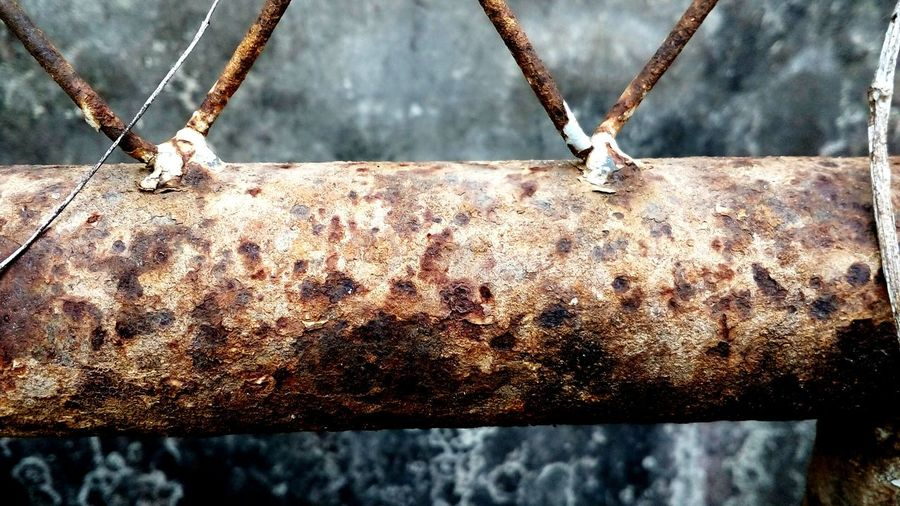 Close-up of bee on rusty chain