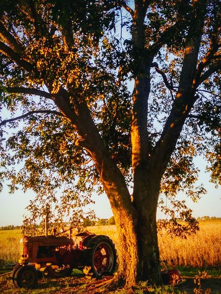 Sunset Tree No People Field Rural Scene Landscape Agriculture Tractor