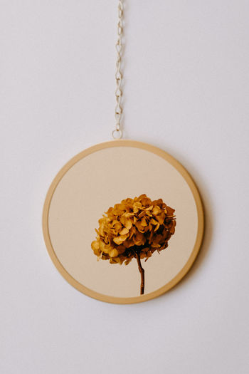 Directly above shot of breakfast on table against white background