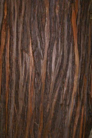 Texture ! Treegasmic Tuesday Beautiful Bark NEM Abstracts Streamzoofamily