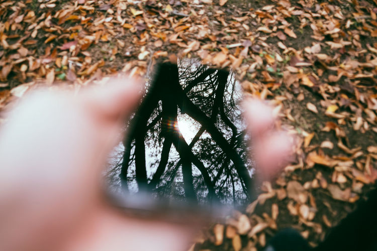 Close-up of human hand in forest during autumn