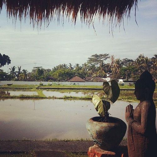 Waking up to Ricepaddies Ubud Bali
