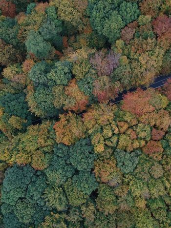 Travelphotography Travelling Djiphotography Photography Dji Full Frame Backgrounds No People Multi Colored High Angle View Day Green Color Land
