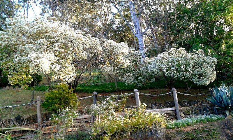 Serra Da Mantiqueira São Paulo, Brasil Nature Garden White Trees Nature_collection