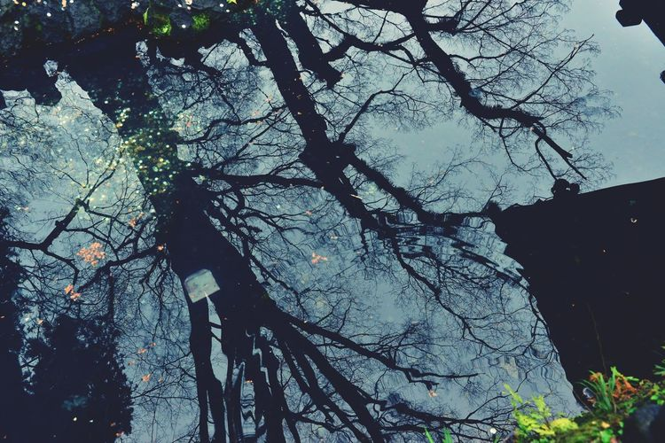 Low angle view of silhouette trees in forest against sky