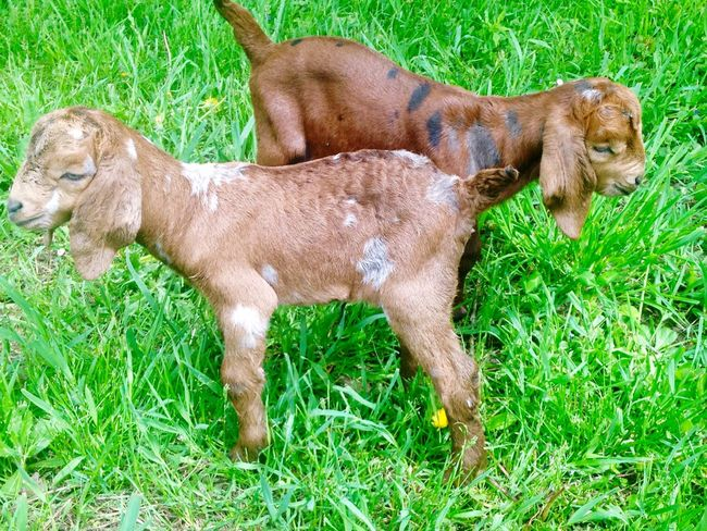 Capture The Moment Farm Life Enjoying Life Taking Photos Check This Out Goats