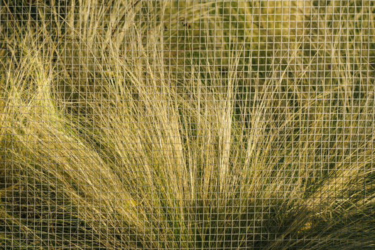 Berlin, Germany, October 10, 2018: Full Frame Glass Plant Behind Protective Fine-Mesh Net Berlin Germany 🇩🇪 Deutschland Color Image Horizontal No People Outdoors Backgrounds Plant Grass Nature Day Growth Beauty In Nature Full Frame Close-up Abstract Environment Tranquility Textured  Pattern Protection Security Safety Park Botany Landscape