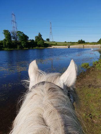 Throughhorsesears Water Tree Sky Calm Swan Horizon Over Water