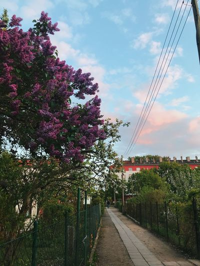 Flowering plants and trees by bridge against sky