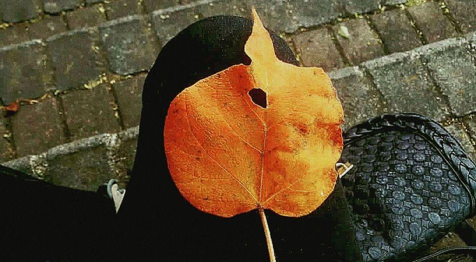 La vida es como la. fotografía: No basta hablar, hay que hacer. - Husni Mubarak Zainal EyeEmNewHere #dayhappy #indie #Nature