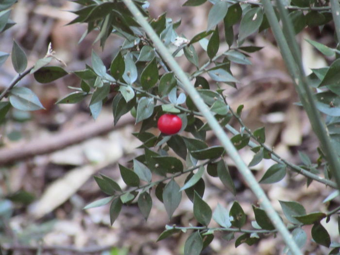 Nature Photography Plant Tree Branch Fruit Red Leaf Close-up