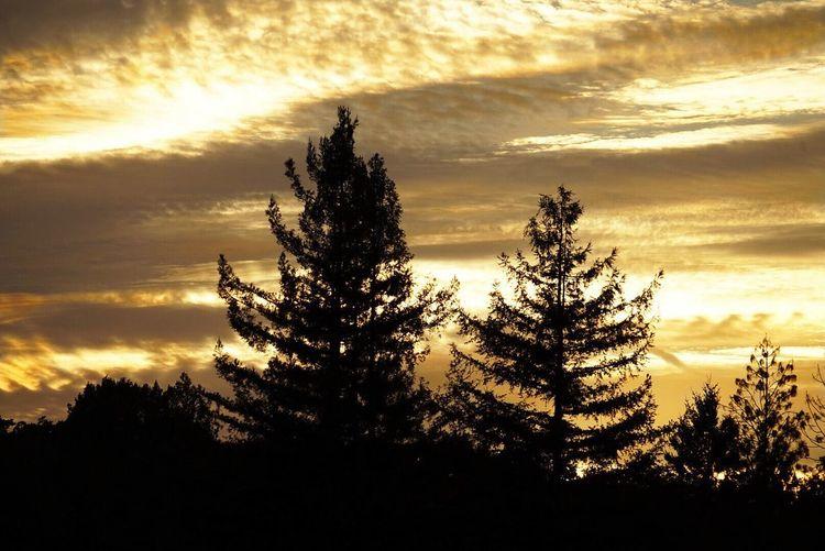 Sony Camera Sony A7 Fire In The Sky Tree Sunset Silhouette Sunlight Dramatic Sky Sky Cloud - Sky Treetop Moody Sky Cloudscape Cumulonimbus Cumulus Cloud