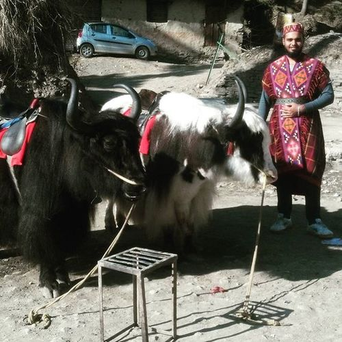 IN KUFRI...... traditional dress of himachal pradesh. Dressup Yak TourHP BoysDayOut