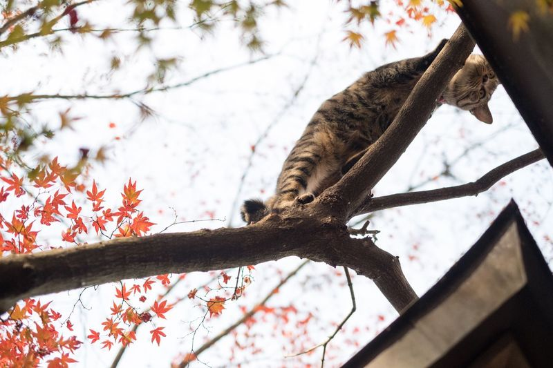 Finding New Frontiers Japan Tree Animals In The Wild Low Angle View Cat Autumn Leaves