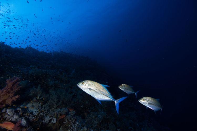 Fish Swimming In Red Sea
