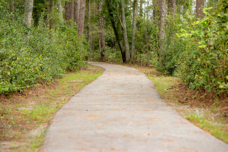 Surface level of footpath amidst trees in forest