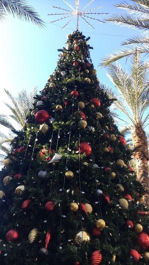 Christmas Tree Christmas Decoration Christmas Ornament Tree Celebration Event Low Angle View Tree Topper Christmas Lights Decoration Celebration No People