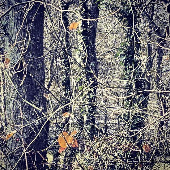 Taking Photos Photographic Memory Gününfotoğrafı Closeupshot EyeEm Nature Lover Nature_collection January2016 TreePorn Nopeople Benimobjektifimden Tree Porn Tree_collection  Treescollection Yaprakdokumu
