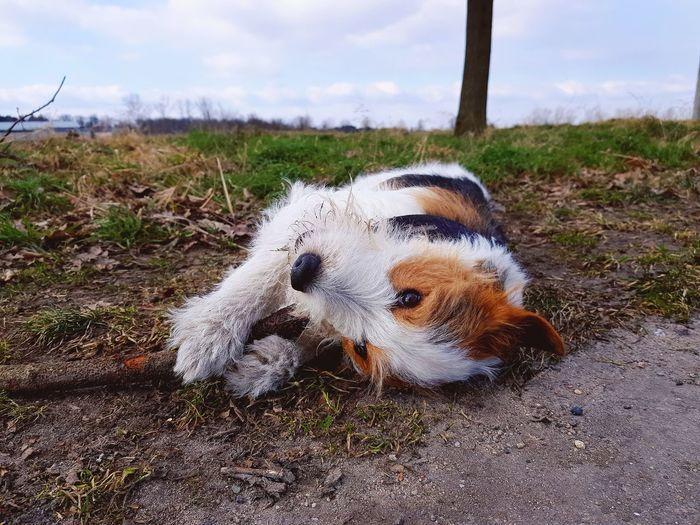 Dog lying on land