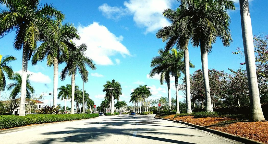 From Where I Stand From My Point Of View Palm Trees Road Blue Sky White Clouds