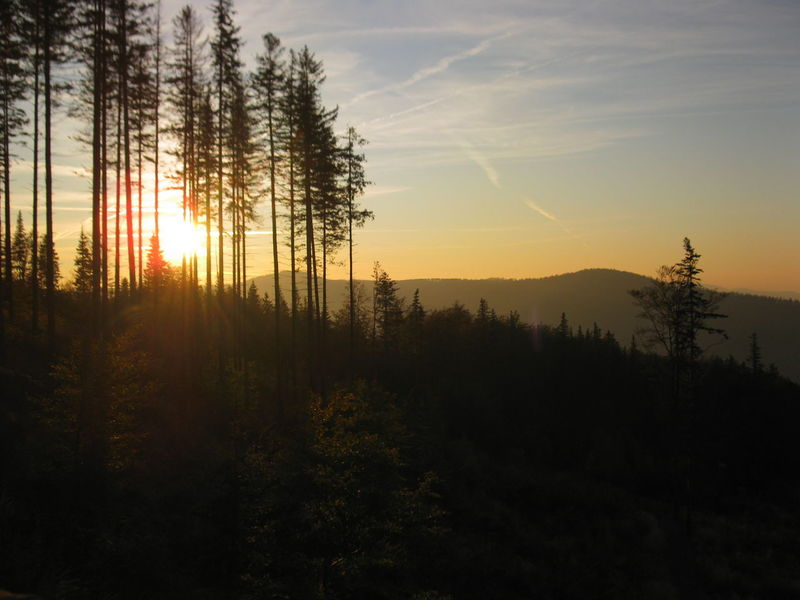 Way down from Skrzyczne mountain, Beskidy (Poland) Beskidy Mountains Skrzyczne first eyeem photo EyeEmNewHere Beskidy Mountains Travel Hiking Outdoors Nature Evening Sun Sunset Evening Forest Landscape Trail Sunset In Mountains EyeEmNewHere Backgrounds Shiluette Betterlandscapes Miles Away Welcome To Black The Great Outdoors - 2017 EyeEm Awards BYOPaper! Sommergefühle EyeEm Selects Lost In The Landscape Perspectives On Nature EyeEm Ready   An Eye For Travel Visual Creativity Summer Exploratorium My Best Travel Photo A New Beginning