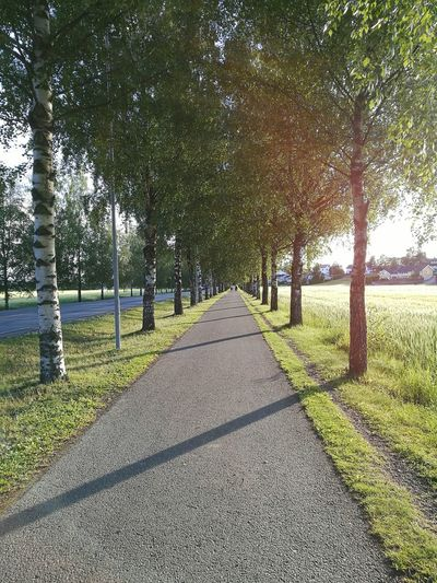 Perspective Road Trees Blue Sky Norway Fine Art Photography