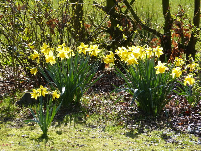 Spring garden ... :-) Aurich Beautiful Garden Beautiful Nature Beauty In Nature Between The Nature Between The Trees Day Garden Life Garden Love Garden Photography Growth Looking To The Other Side March 2017 Nature No People Ostfriesland Other Side Of The World! Outdoors Plants Photography Spring 2017 Spring Garden Sun Sunny Day Wild Garden Wild Nature