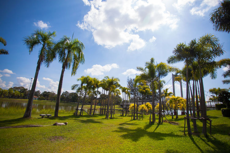 The sky is beautiful clouds At the public park of Thailand Tree Plant Sky Tropical Climate Palm Tree Grass Nature Green Color Cloud - Sky Beauty In Nature Sunlight Growth Day Land Tranquility Tranquil Scene Field Scenics - Nature Outdoors Park No People Coconut Palm Tree