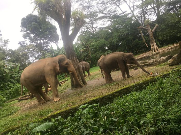 Elephants in a forest