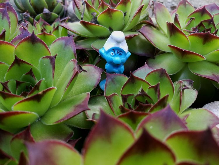 Schtroumpf Puffo Smurf Nature