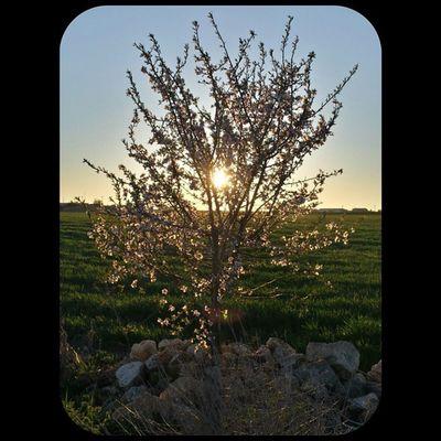 En algún lugar de Valladolid , contemplando la puesta de sol a través de las ramas de este bonito... ¿ciruelo o cerezo? Vallaigers Estaes_castillaleon Sinfiltros PuestasDeSol Estaes_Valladolid Igersvalladolid Estaes_espania MeGustaPucela EstaEs_Universal_2 EstaEs_Universal_5