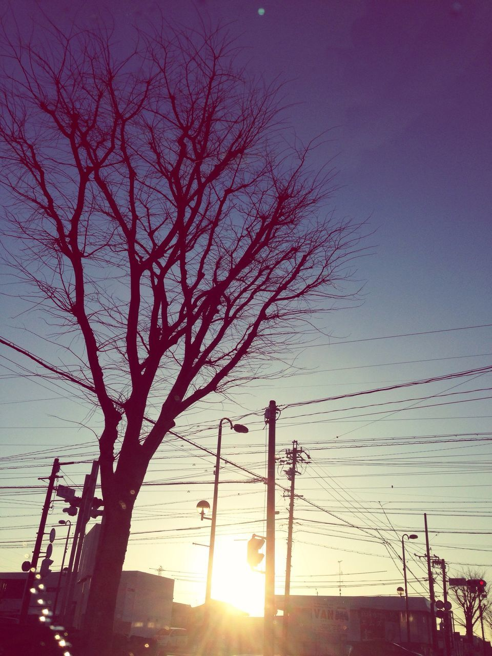 sunset, cable, sky, sun, power line, no people, sunlight, low angle view, outdoors, bare tree, silhouette, built structure, electricity pylon, nature, building exterior, tree, architecture, clear sky, telephone line, day, city