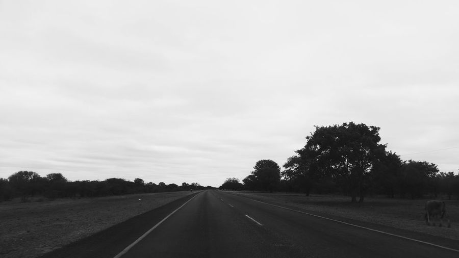 The Way Forward Road Cloud - Sky Tranquility Travel Road Trip No People Journey Nature Day Outdoors Landscape Tree Sky Scenics Beauty In Nature Faces Of Africa EyeEm EyeEm Selects Faces Of EyeEm South Africa EyeEm Gallery Rural Scene Beauty In Nature Road To Nowhere