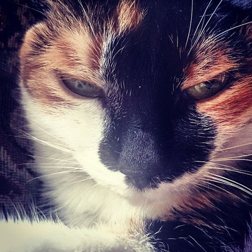Picoftheday Photooftheday Instalike Instadaily insta cat cats catsofinstagram
