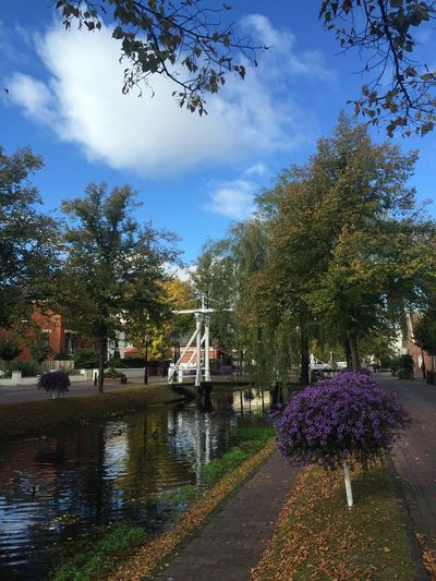EyeEm Nature Lover Colours Orange Autumn Leaves Autumn Leaves Sun October Sweet October! Mother Nature Nature Countrylive Kanal Canal Papenburg Beautiful Town Home