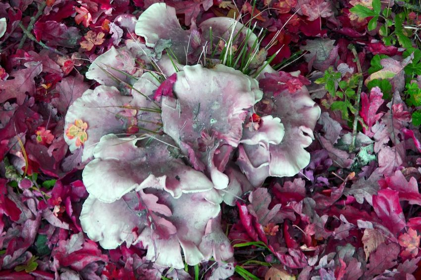 Fungus Autumn Autumn Leaves Coloursplash Colour & Light Creative Light Flower Porn Light Reflections The Art Of Photography Landscape #Nature #photography