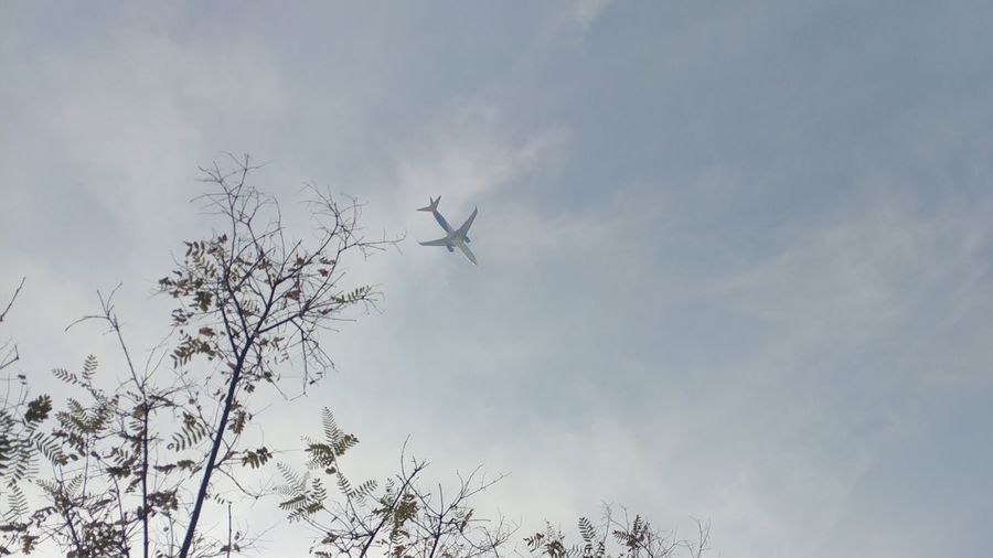 bye bye Plane Flying Plane In The Sky Plane Flying Low Angle View Silhouette Sky Technology Air Vehicle Tree