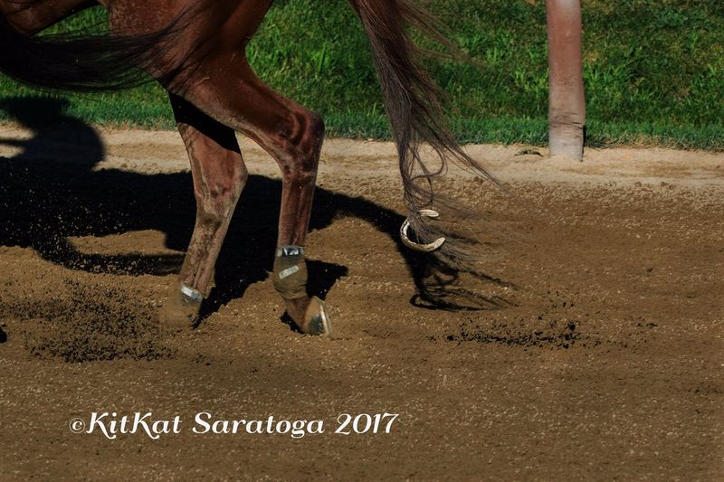 Catch Of The Day Catch Of The Day Fifth Shoe GunRunner Horses Horseshoe Saratoga Race Course Thoroughbred