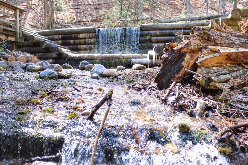 View of waterfall in forest during winter