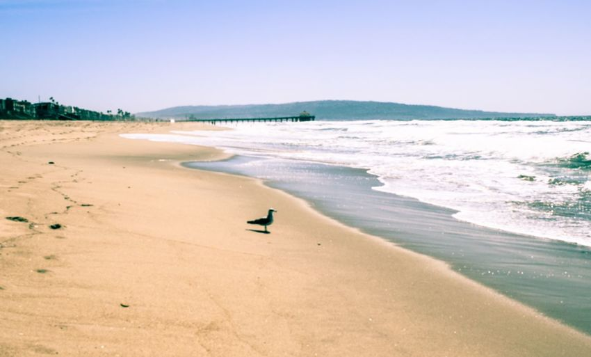 Animal Themes Beach Beauty In Nature Bird Blue Clear Sky Coastline Copy Space Horizon Over Water Incidental People Nature Sand Scenics Sea Shore Surf Tranquil Scene Tranquility Water Wave