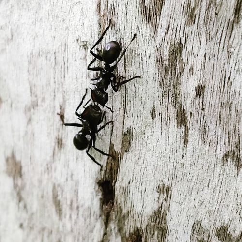 Battle Ants Insect Close-up Ant Tiny Dragonfly Wall - Building Feature Two Animals Wall Housefly Chachoengsao Ladybug Animal Wing Mounted Brick Wall Bug Pest Damselfly Wooden Animal Antenna Stone Wall Winged Invertebrate Mosquito Colony
