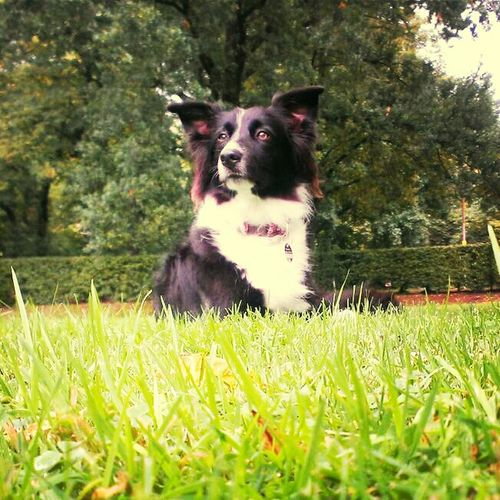 Dog Luna Summer