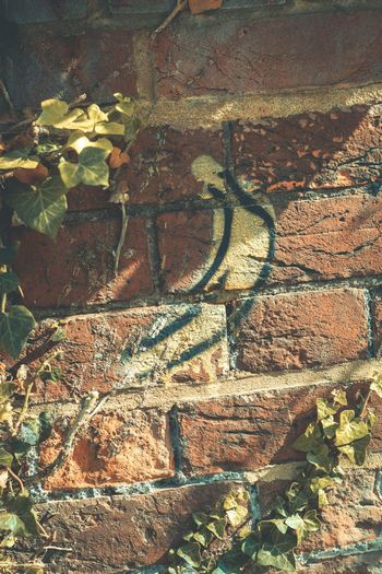 Urban finds.. Sunlight Close-up No People Outdoors Photography Streetphotography Urban Art Yellow Scenics England EyeEm Best Shots Colorful Detail Nikon Kent Stencil Fruit Brick Wall Faversham Check This Out Hello World Nature Contrast