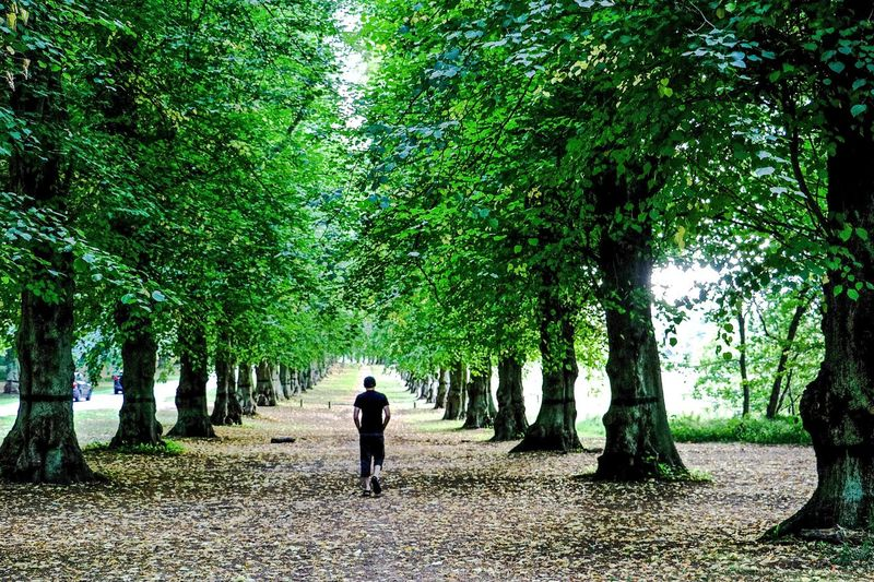 Beauty In Nature Nature One Person The Way Forward Tree Tree Alley Tree Trunk Walking Walkway