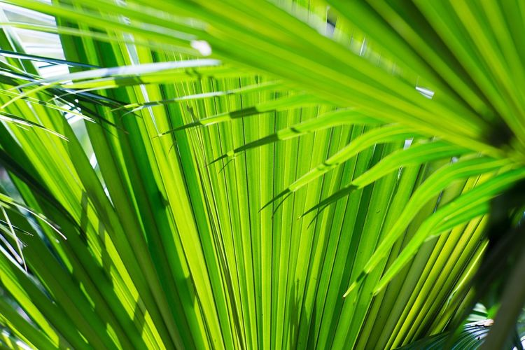 Nature Beauty Nature Photography Nature Photography Natural Green  Natural Beauty Sunnyday Sunny Day Sunny Day Sunny Green Color Nature Leaf Palm Leaf Growth Palm Tree Beauty In Nature Close-up Plant Freshness No People Outdoors Day