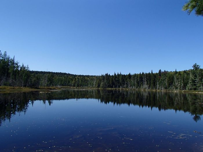 Forêt mixte laurentienne - Laurentian Mixed Forest (Lac Jackson) Reflection Water Sky Lake Tranquility Plant Scenics - Nature Beauty In Nature Tranquil Scene Blue Idyllic Reflection Lake
