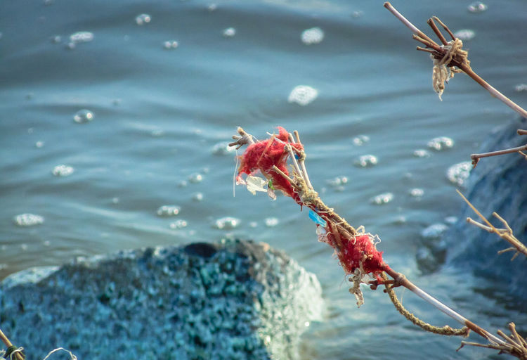 Close-up of red crab in water