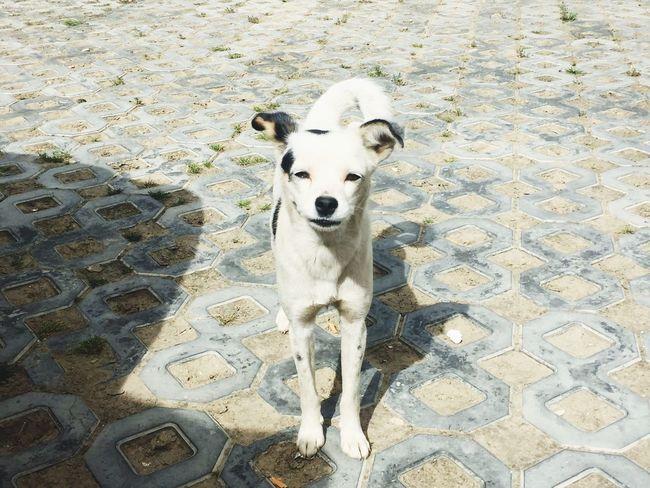 Dog Looking At Camera Domestic Animals Travel Destinations Tibet Travel