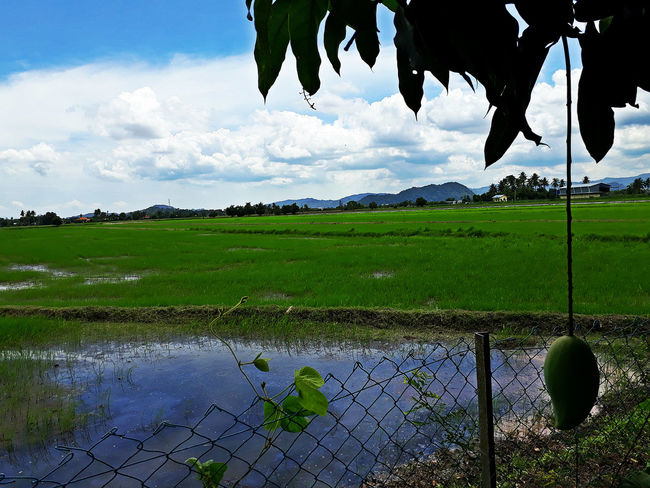 EyeEmNewHere Mango Tree Beauty In Nature Cloud - Sky Environment Landscape Nature No People Outdoors Outdoors❤ Scenics - Nature Water